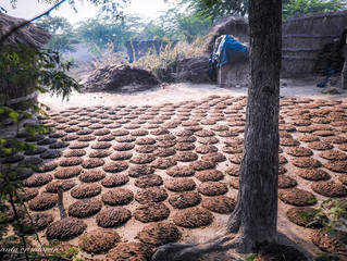 Vedic Uses For Cow Dung