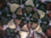 IMG_5397_edited.jpg