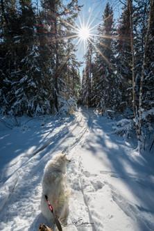 Winter Pinehouse