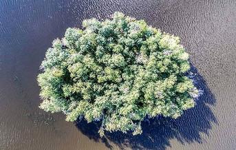 Pinehouse island