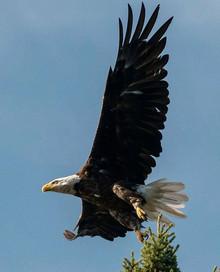 Eagle Pinehouse