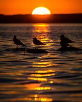 Pinehouse Lake Sunset