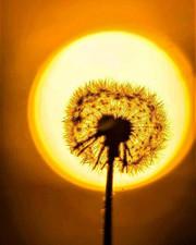 Pinehouse sun