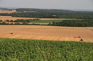 Champs et vignes durant les moissons