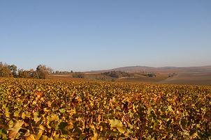 vignes ensoleillées