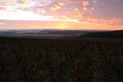 Coucher de soleil au dessus de nos vignes