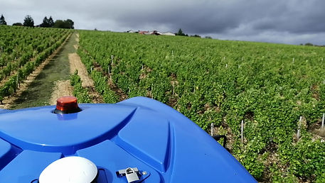 Vendanges 2019 avec la nouvelle machine à vendanger. Qualité optimale obtenue par le tri embarqué