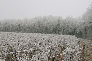 vignes et bois givrés