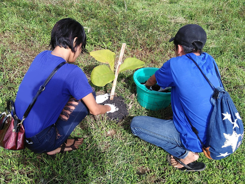 ミャンマーチーク植林 オルタナティブ無垢フローリング