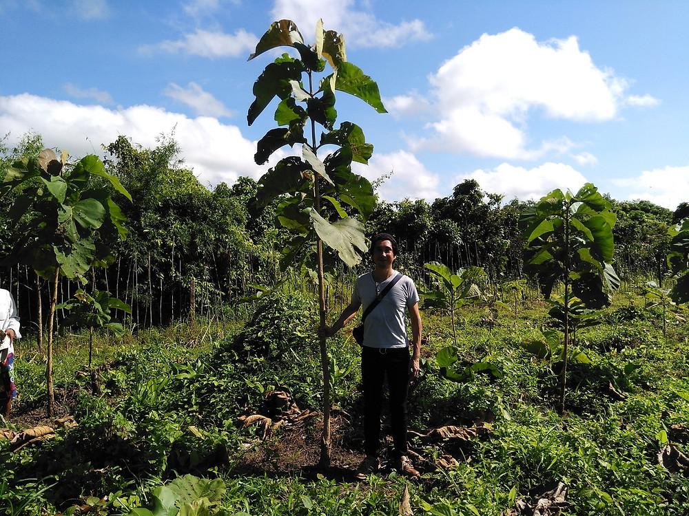 ミャンマーチーク 植林後1年4カ月