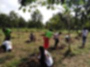 チーク植林 in Myanmar