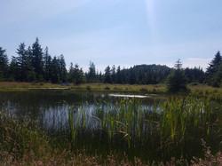 pond @ pavilion