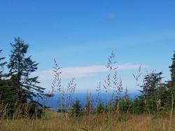 Stephania coast view