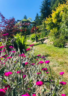 Garden Path 1