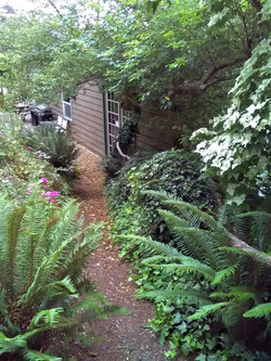 Fern pathway to Rogue