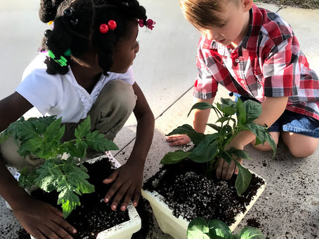 Growing up TCS--Deep roots help our kids blossom in our K-8 model