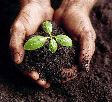compostinghands.jpg