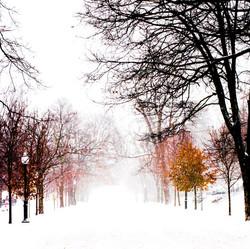 """Winters Morning"""