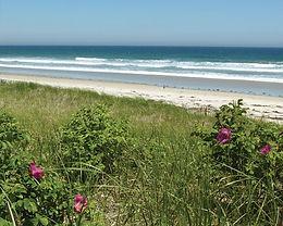 beach 4 v.2._roses.jpeg
