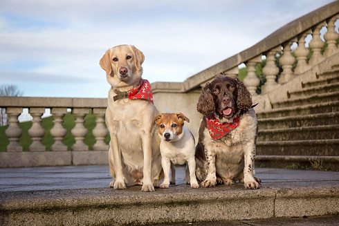 Three dogs in Williamson Park, Lancaster