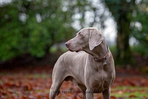 Dog photography Lancashire Cumbria pet photographer
