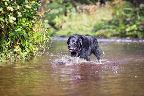 Dog photography Lancashire and Cumbria