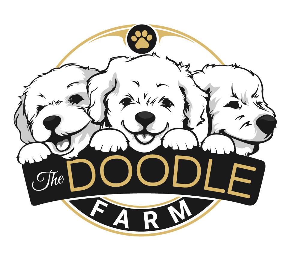 Labradoodles Colorado The Doodle Farm