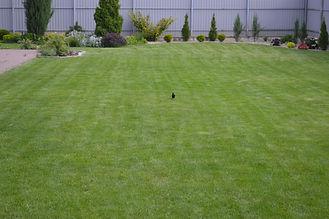Постелить газон