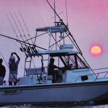 Boston Whaler Catalog