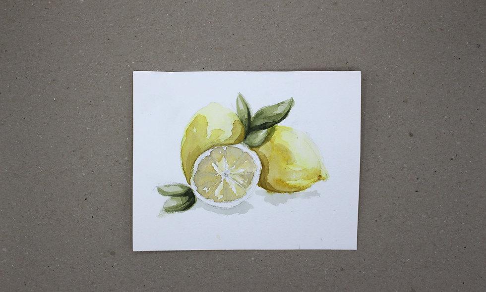Aquarellzeichnung  –  Zitrone