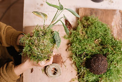 close up of hands holding kokedama , diy