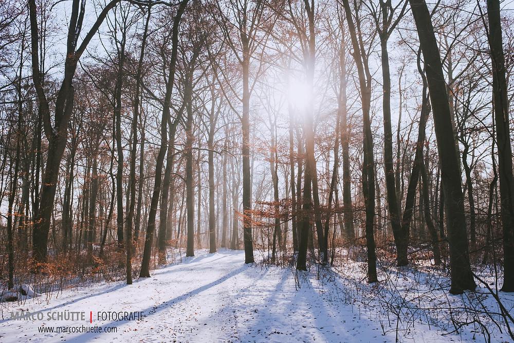 Nach dem Schneefall - die Sonne ist zurück, brachte aber klirrende Kälte bis zu -17 Grad in den Nymphenburger Schlosspark. Fuji X100T,  1/2000 Sek, f 4.5, ISO 400, freihand