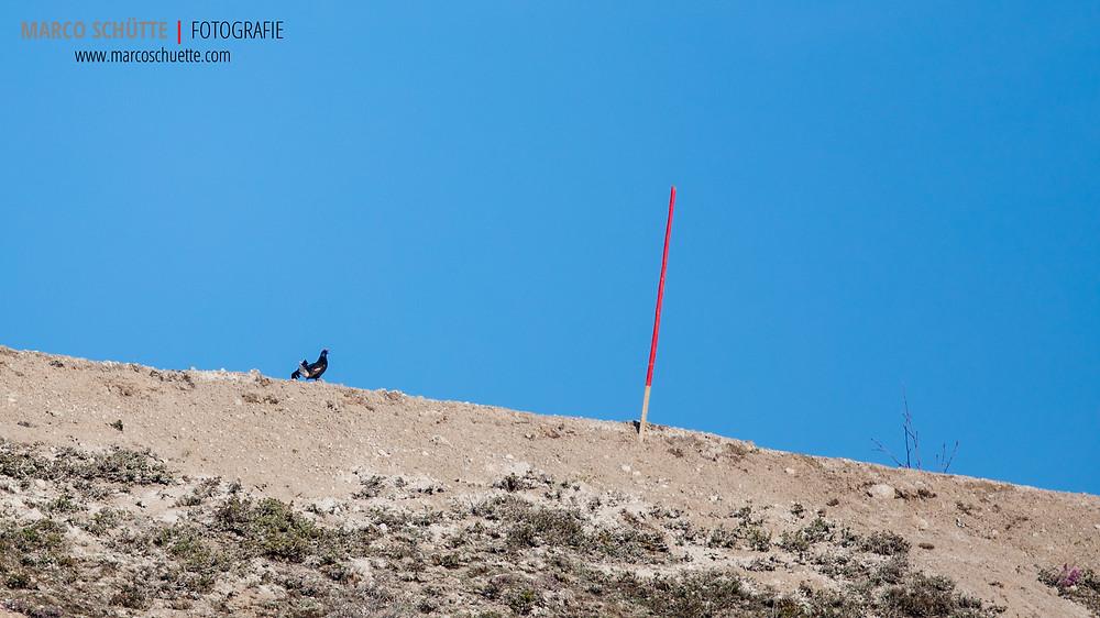 Optisch gleicht der neue Balzplatz einer Wüste