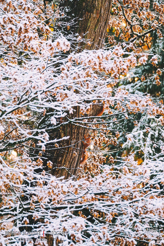 Der erste Schnee im Nymphenburger Schlosspark Anfang November. Fuji Pro-2 mit Fuji XF 100-400, 1/125 Sek, f 5, ISO 400, freihand