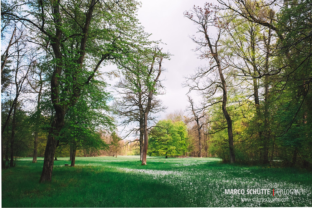 Frühling im Nymphenburger Schlosspark, Fuji X70, 1/850 Sek, f 5.6, ISO 400, freihand