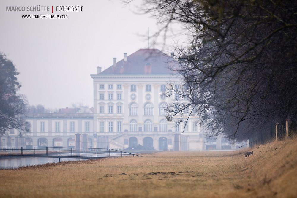 Reh vor Nymphenburger Schloss