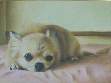 チワワの肖像画