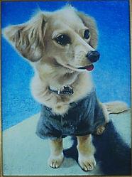 チワックス ペット肖像画 動物絵画
