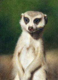 ミーアキャット 肖像画 meerkat