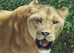 lion ライオン 肖像画