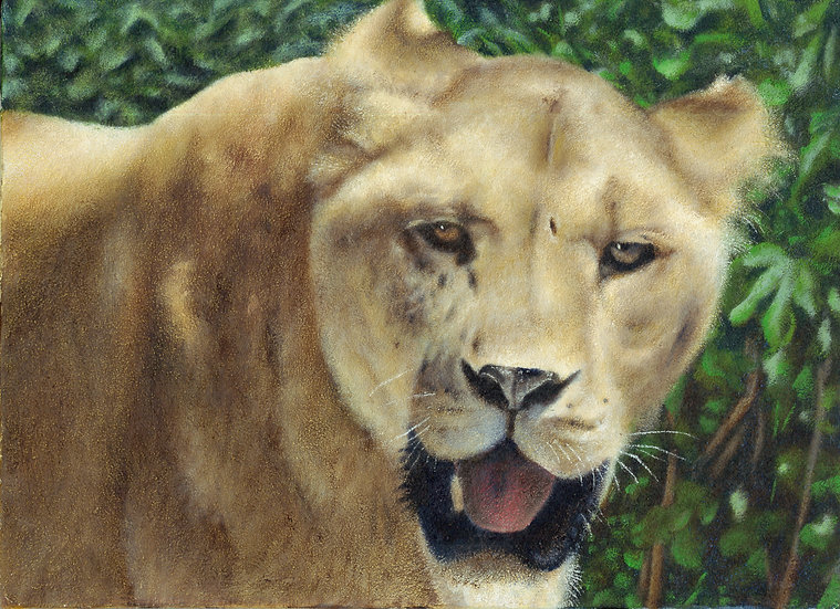 ライオンⅡ