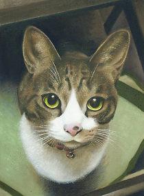 アメリカンショートヘア ペット肖像画 動物絵画