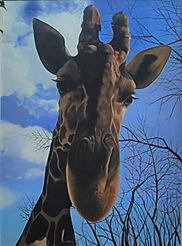 キリン giraffe アミメキリン 麒麟 動物絵画 ペット肖像画