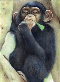 チンパンジー 肖像画 Chimpanzee
