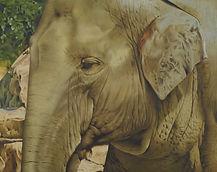 ゾウ elephant インド象 ペット肖像画 動物絵画