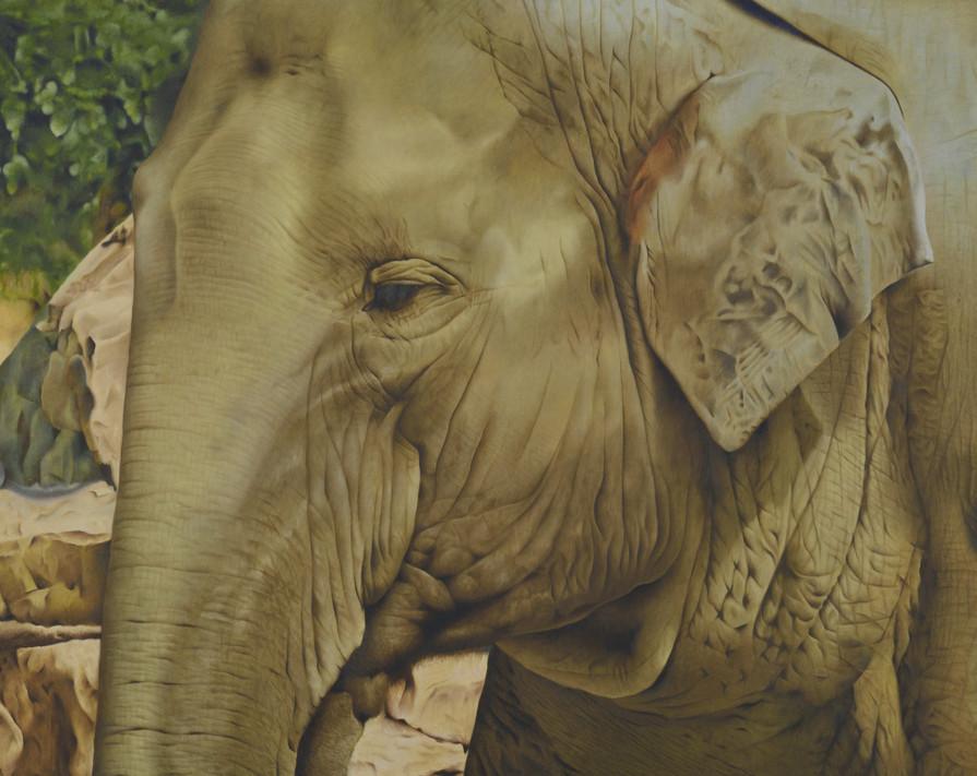 油絵具で描かれた象の肖像画