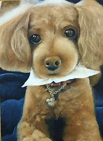 トイプードル ペット肖像画 動物絵画