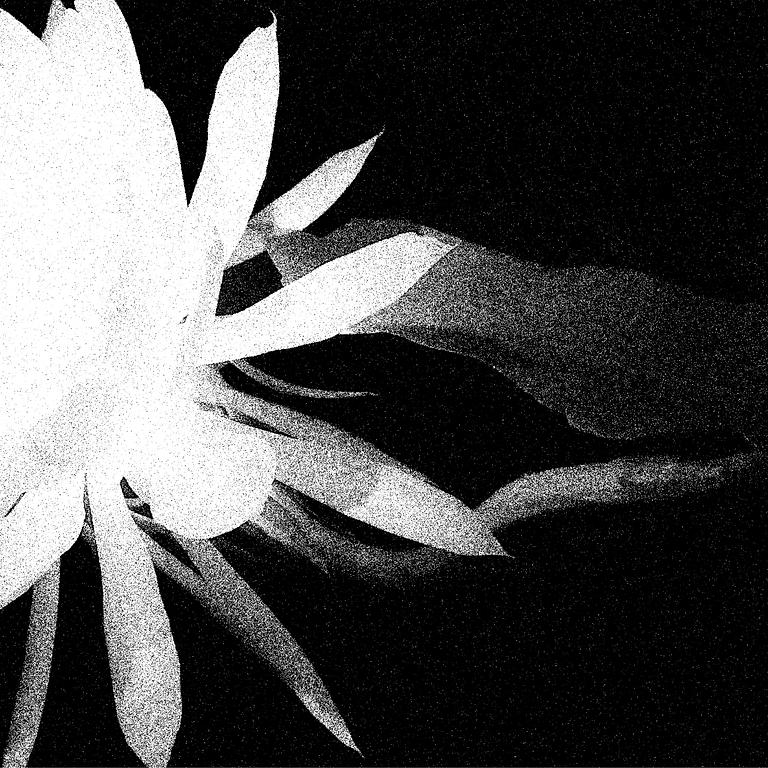 שירה לגמן ומוסיקה נובה מציגים: לילה לבן