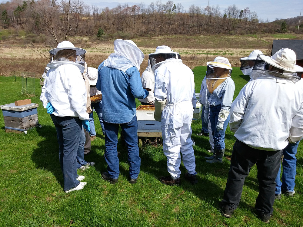 New Beekeepers see how to inspect an overwintered colony