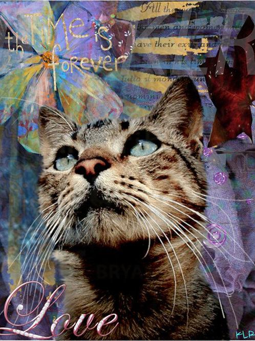 Comforts and Kitten  digital art
